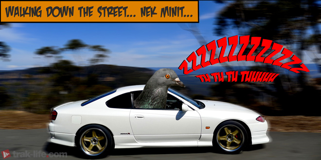 Turbo Flutters - Want a Pigeon? - trak-life
