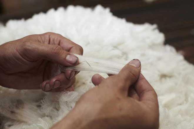 The sorting process for Merino wool (Image: The Woolmark Company)